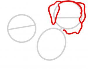 Питбуль нарисованный карандашом поэтапно 125